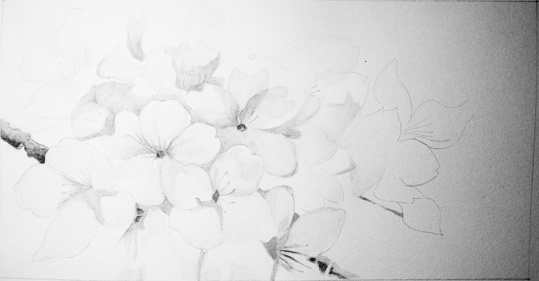 手绘彩铅桃花