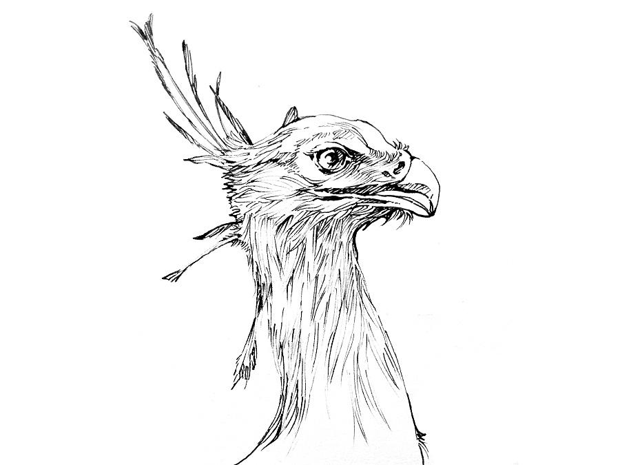 动物系列|钢笔画|纯艺术|liusu1234 - 原创设计作品