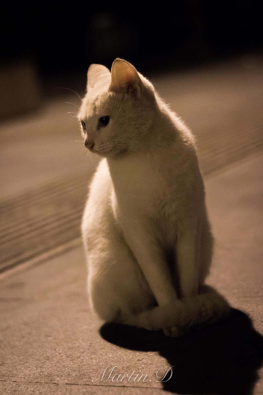 流浪猫系列之大白喵|宠物/动物|摄影|martins92
