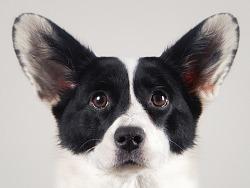 宠物证件照