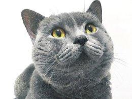 彩铅`步骤`猫星人—《枪》