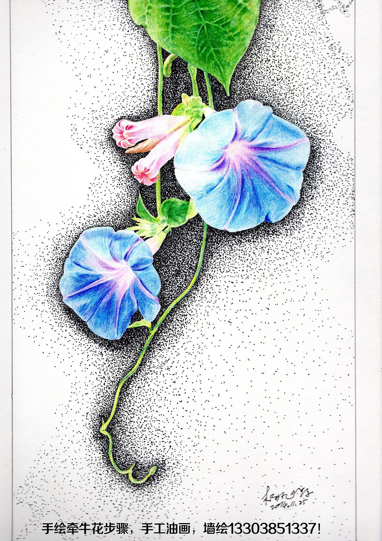 手绘牵牛花步骤 纯艺术 彩铅 简一 - 原创作品 - 站酷