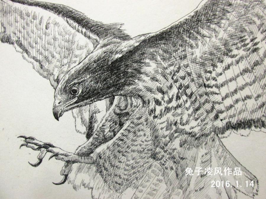 中性笔画老鹰 素描 纯艺术 兔子凌风 原创设计