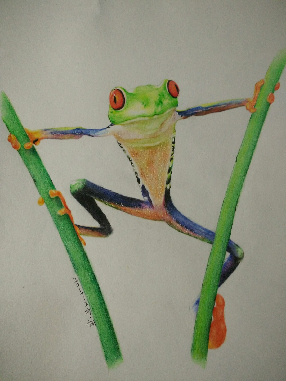 鸟的彩铅手绘图