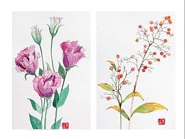 一组水彩花卉