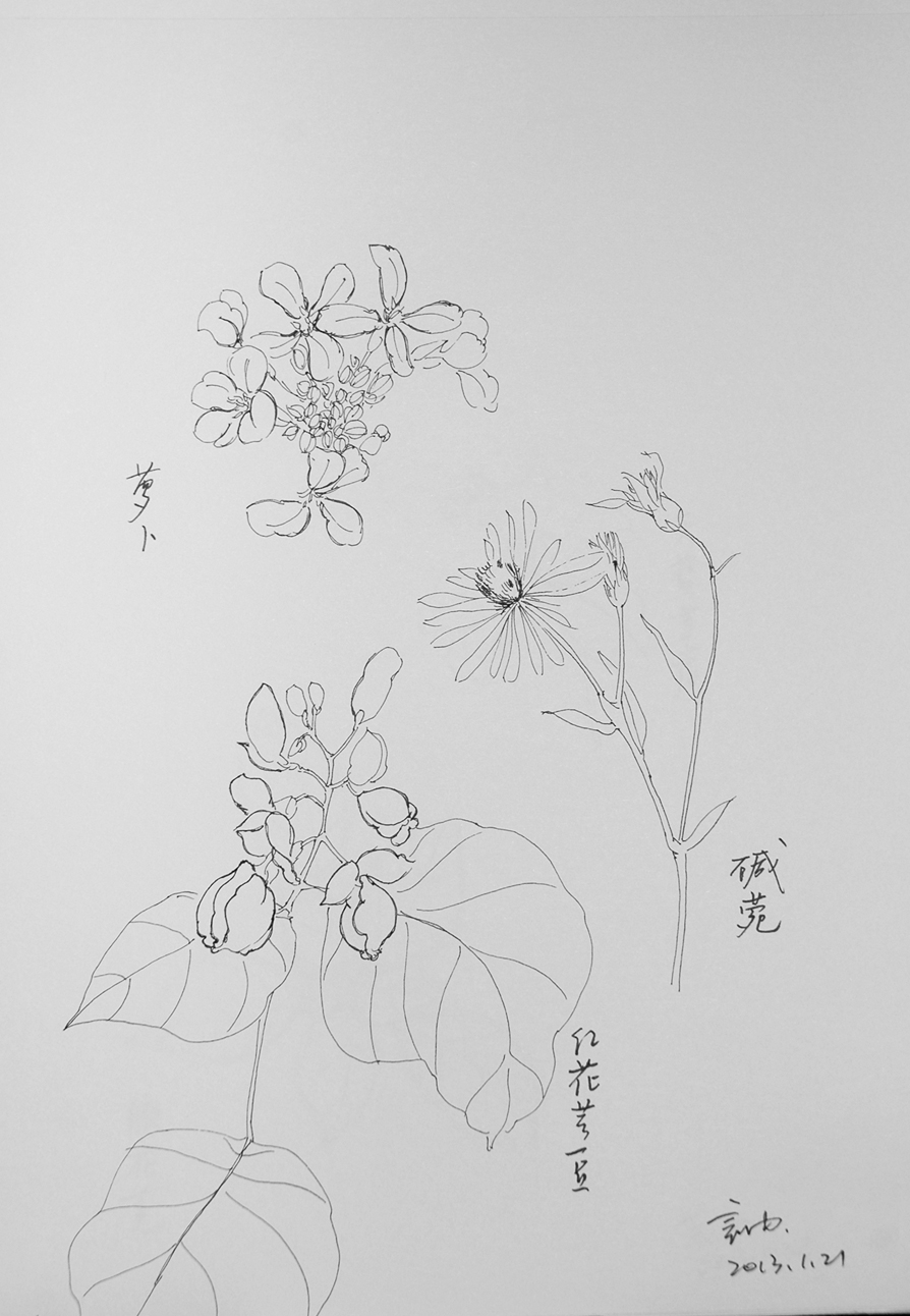 红花简笔画图片大全