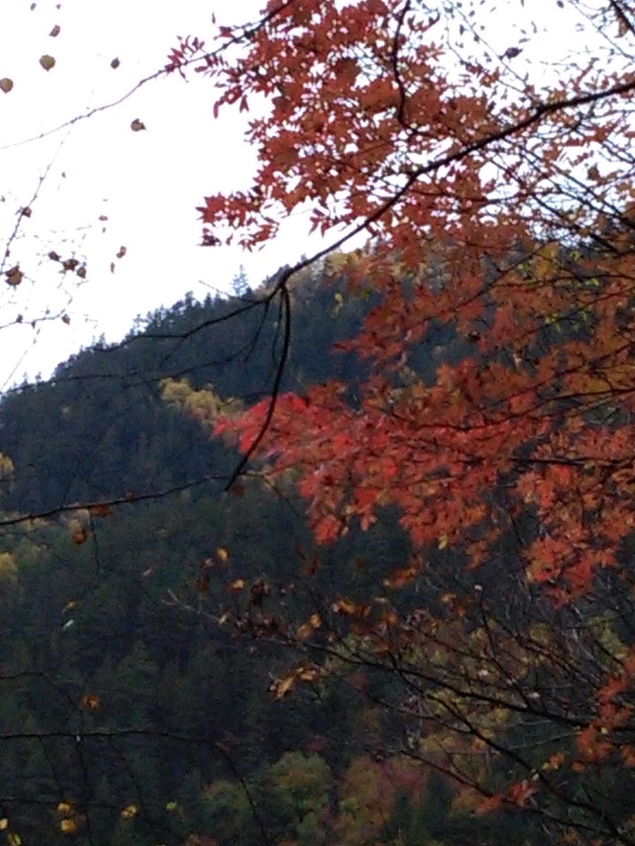 壁纸 枫叶 风景 红枫 树