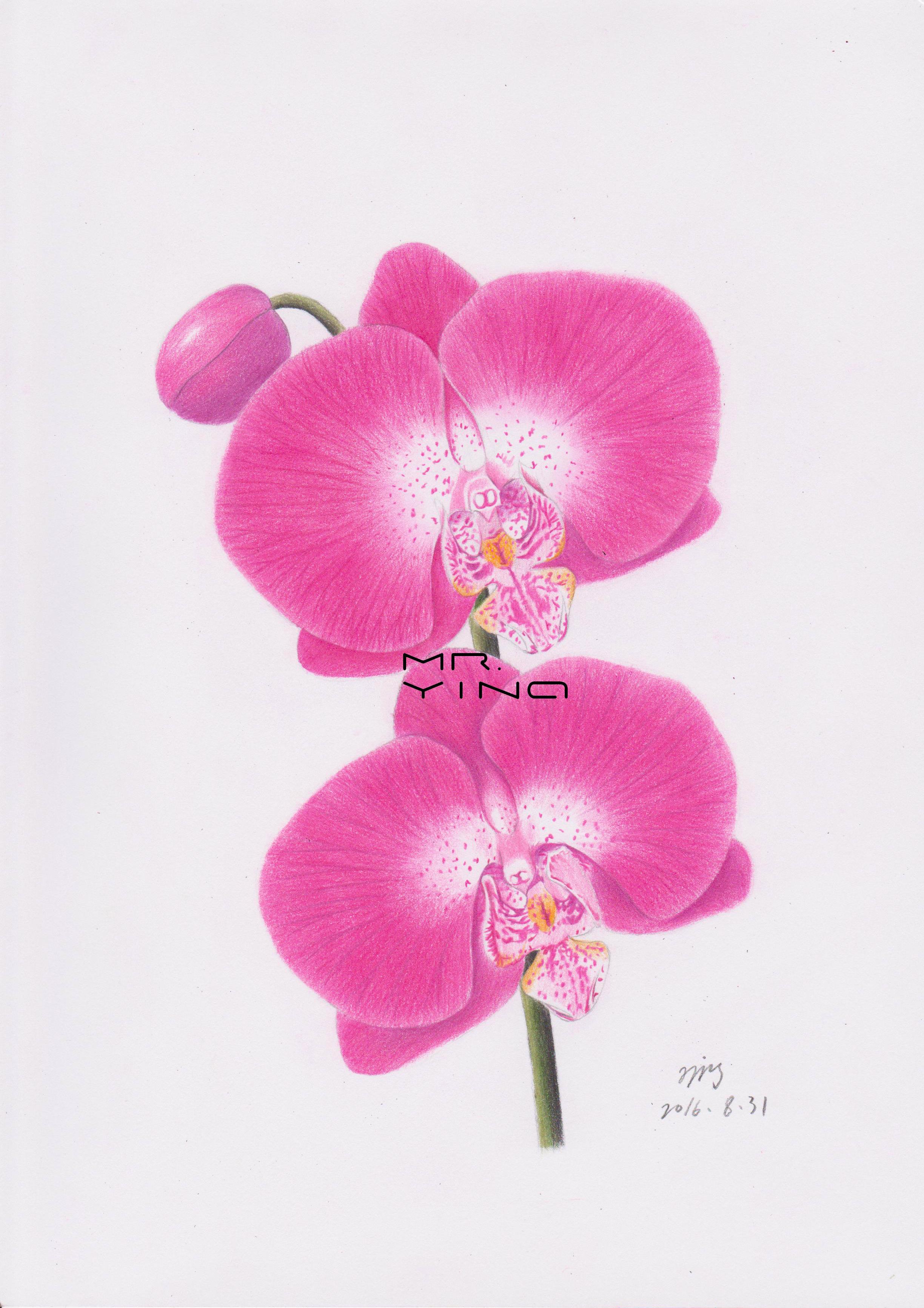 手绘彩铅鲜花集