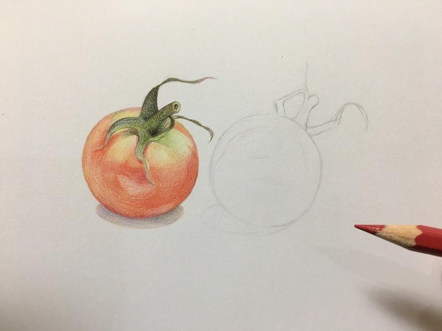 西红柿彩铅手绘