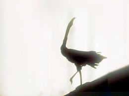 碎木-黑鹤