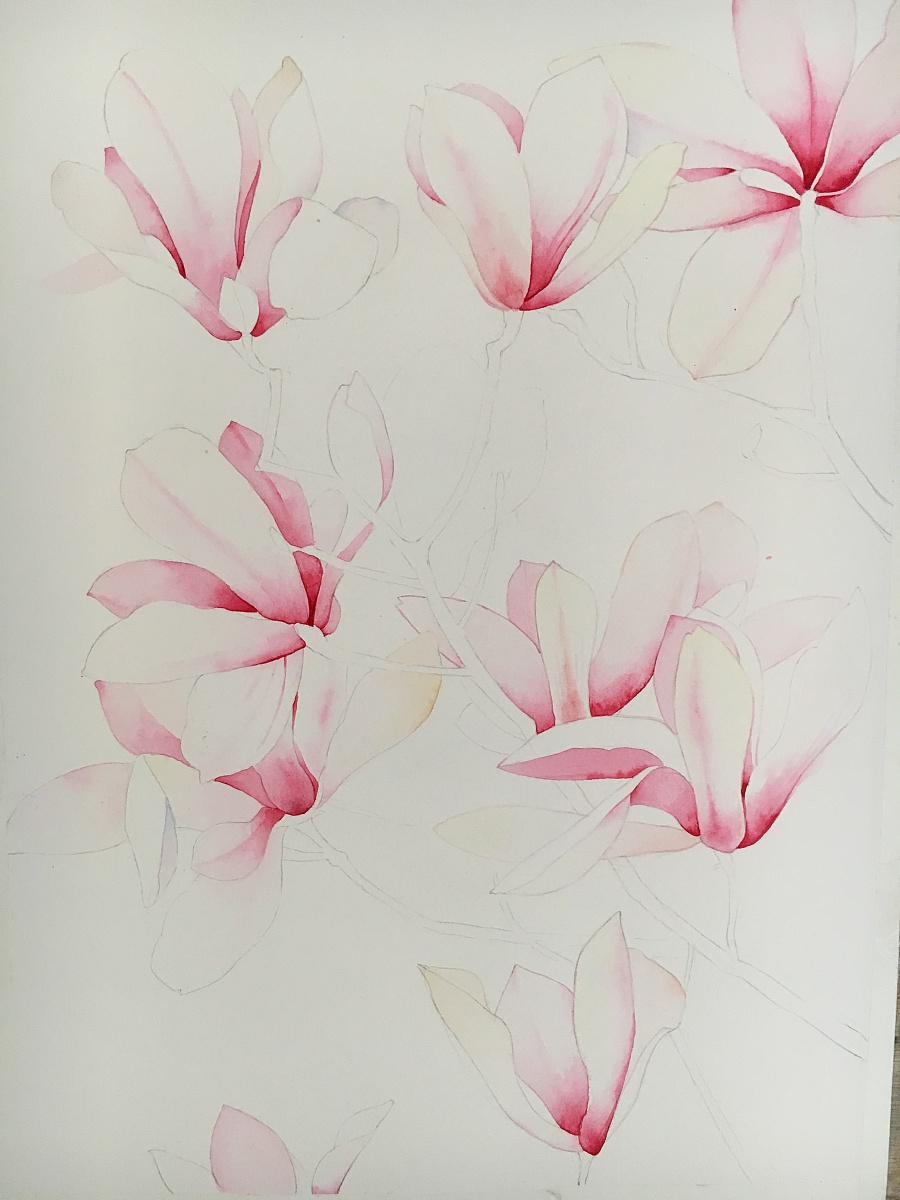 玉兰花水彩手绘|绘画习作|插画|天空安静