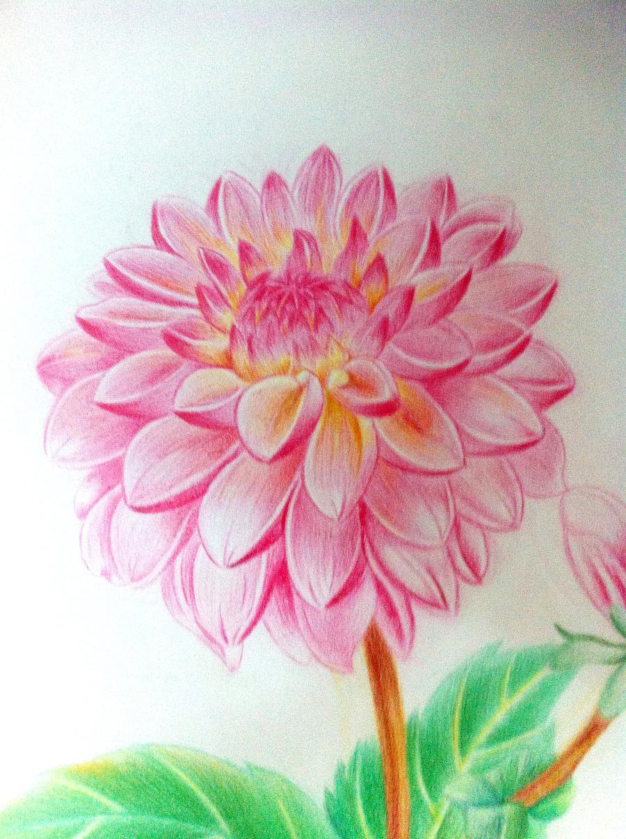 彩铅手绘花|绘画习作|插画|ui