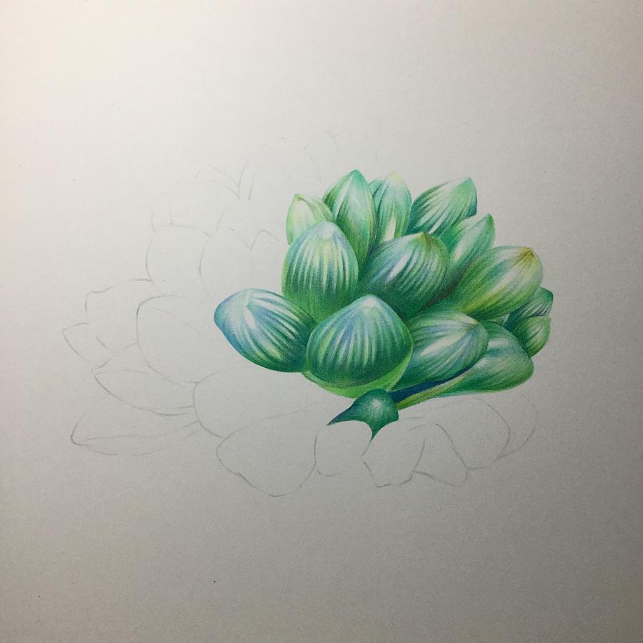 玉露彩铅手绘图