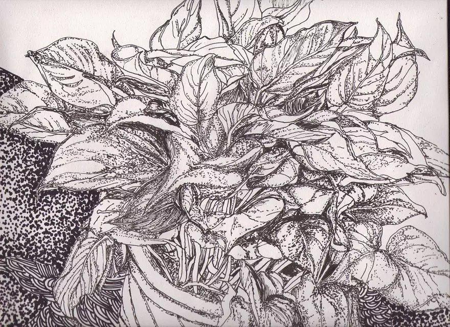 莲蓬图片手绘水彩笔画