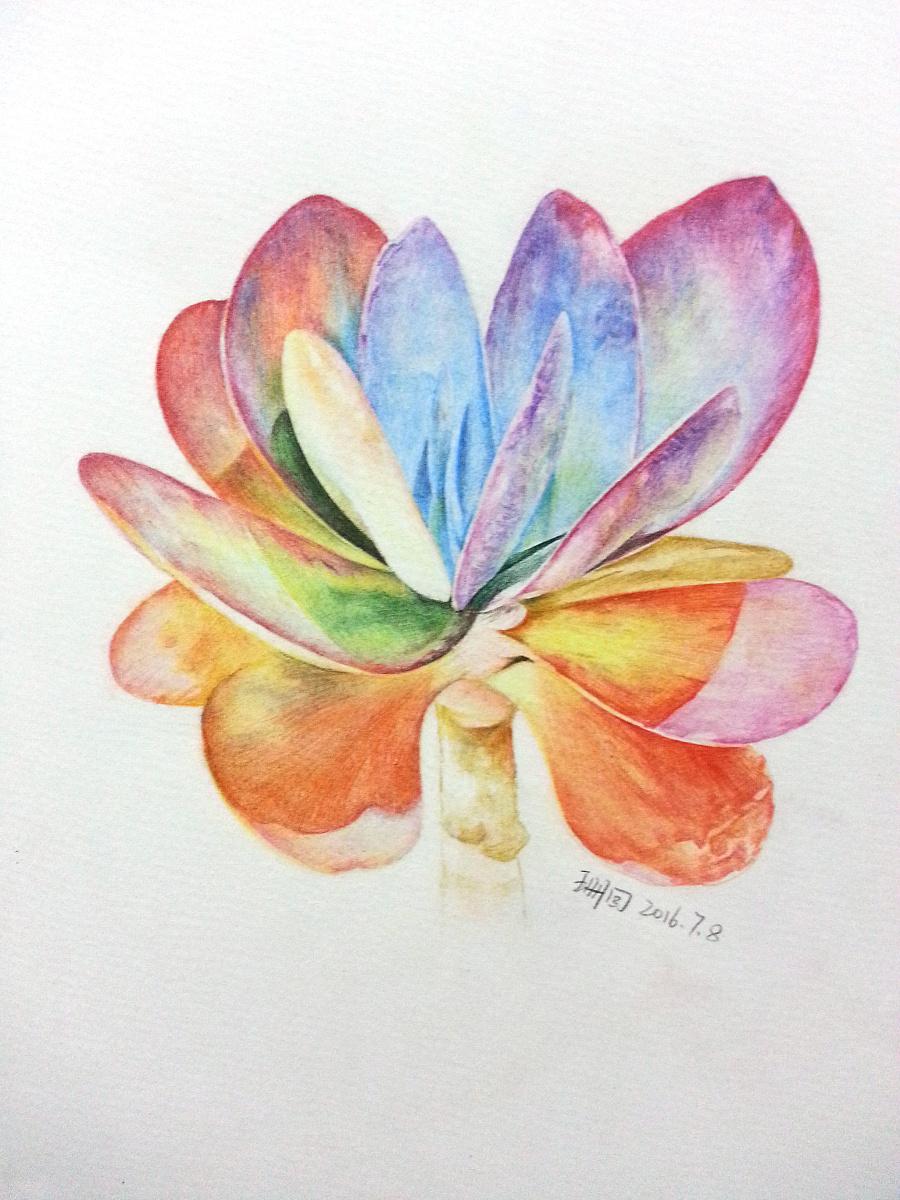 花卉植物唐印|彩铅|纯艺术|珊回