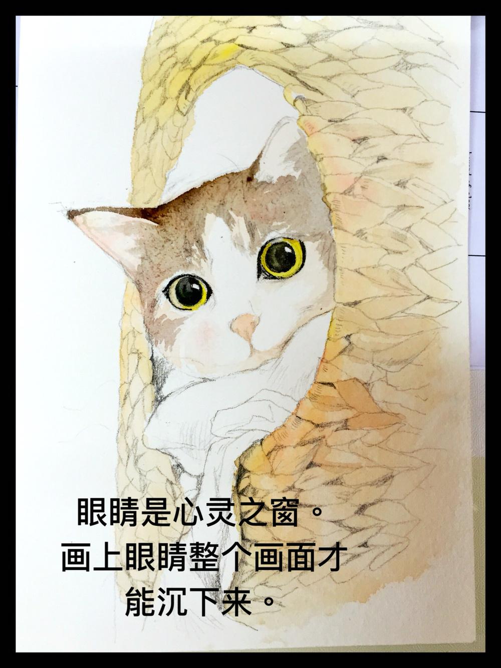 手绘水彩瓜皮猫.教程图解