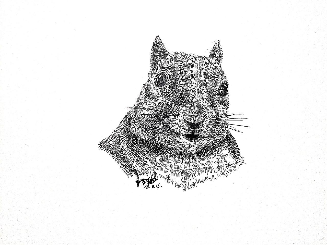 李万海钢笔手绘《鼠》