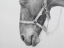 《熟睡的马》