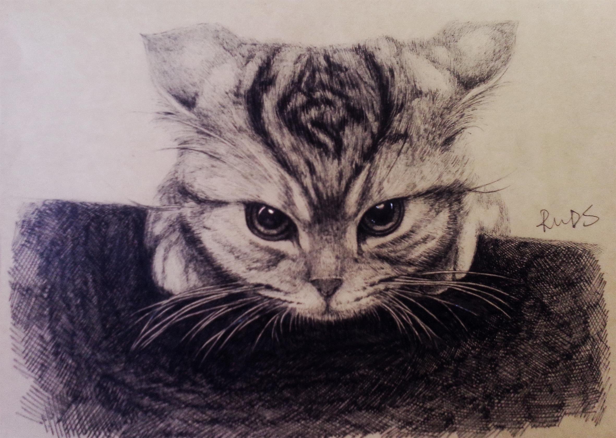 手绘练习猫咪两只
