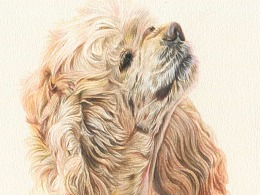 三只小型犬-阿沁作品