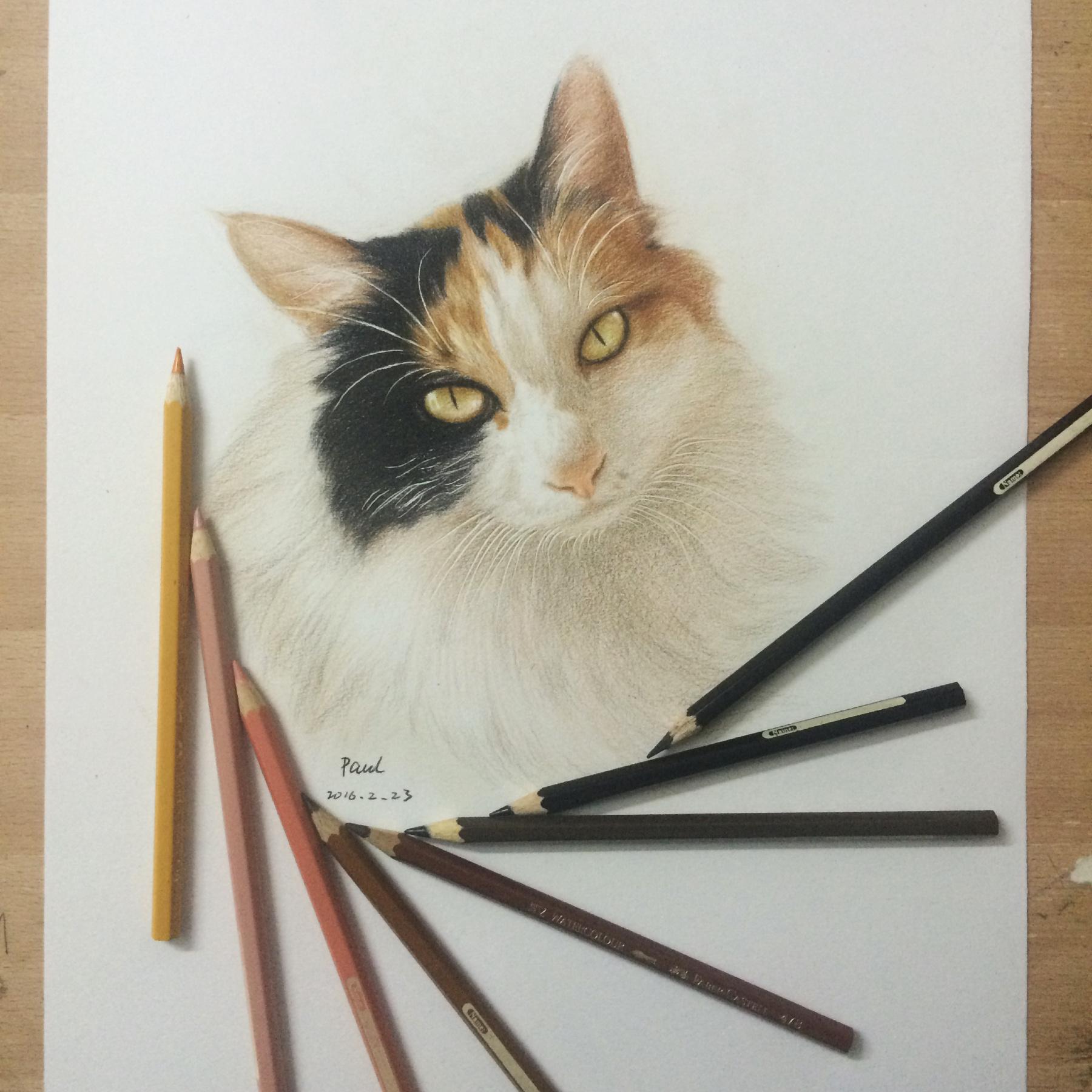 彩铅 素描猫