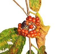 秋天的扁担杆子