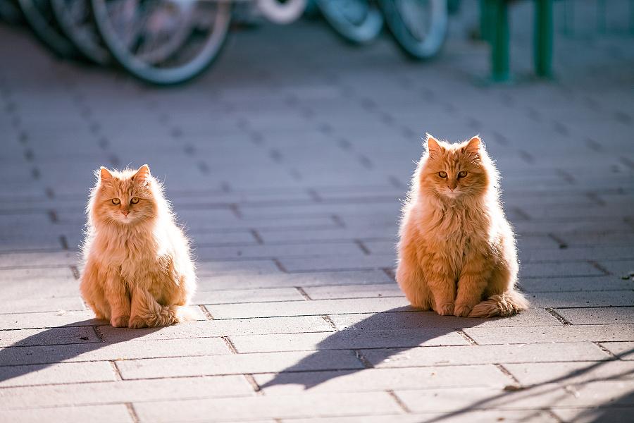 查看《拍了1整年,走过10多座城市,只为这30张年度猫片!》原图,原图尺寸:1920x1280