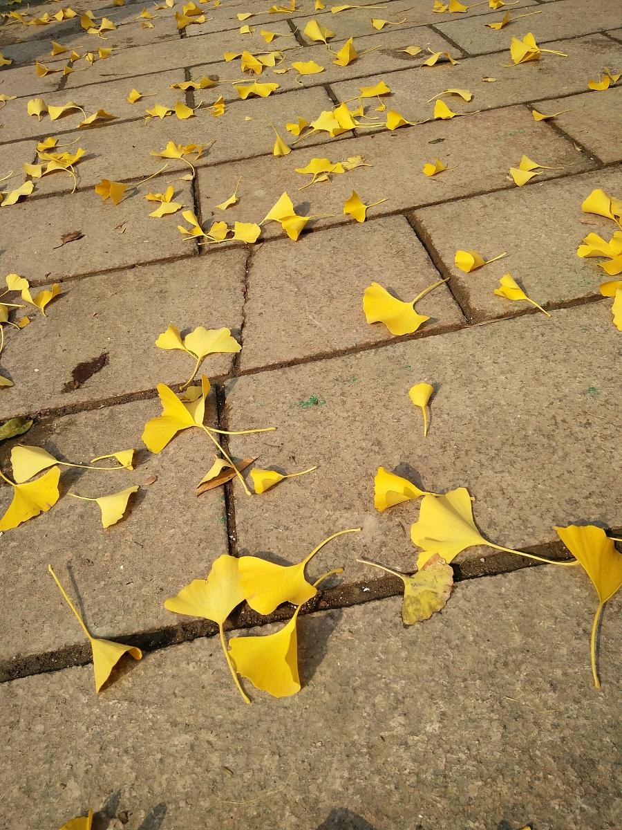树叶飘落的季节图片