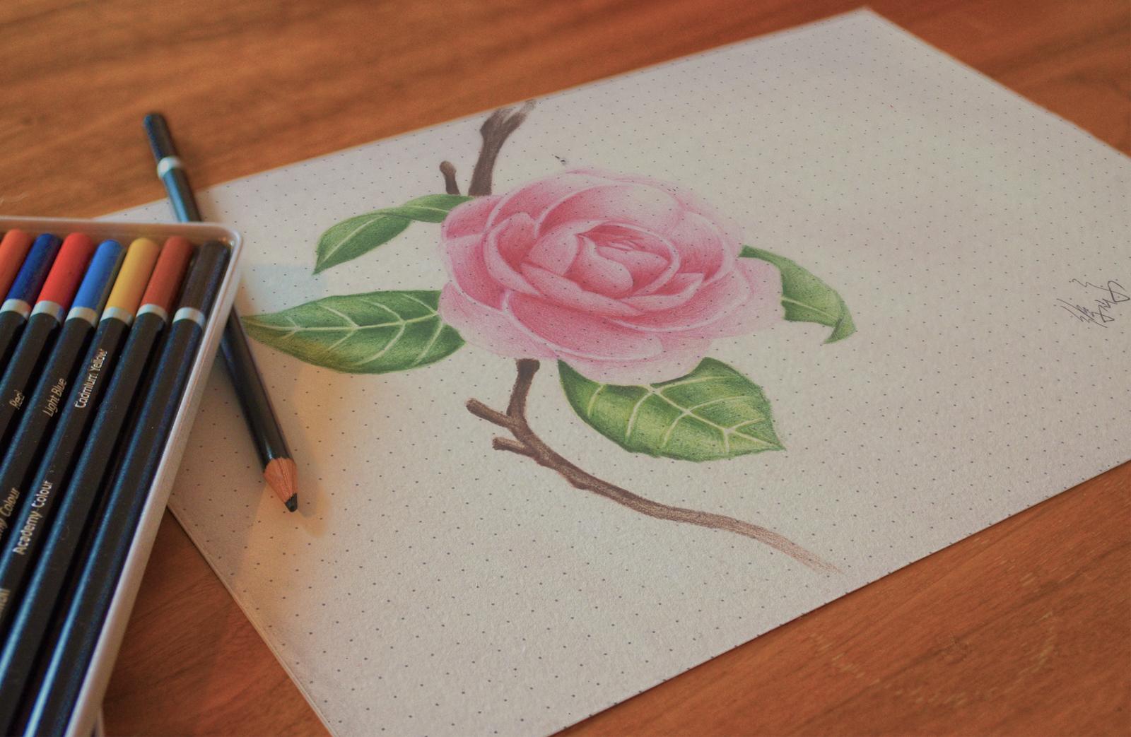 山茶花 手绘 素描 彩铅 超写实 图标