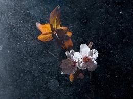 梅花——另类的梅花