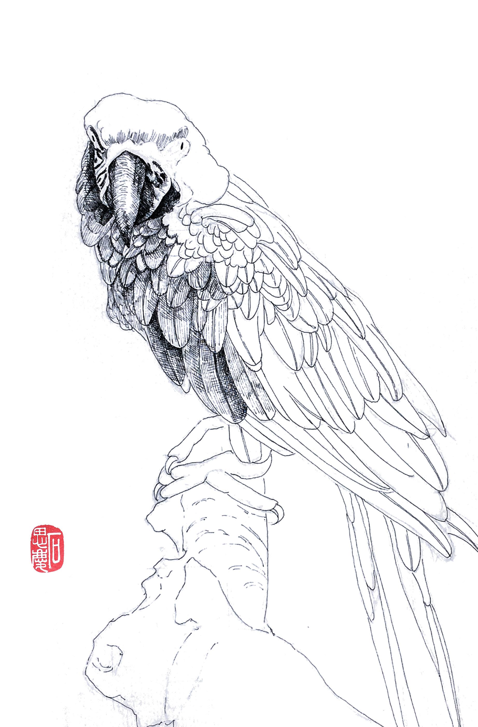 石思庆手绘·鹦鹉