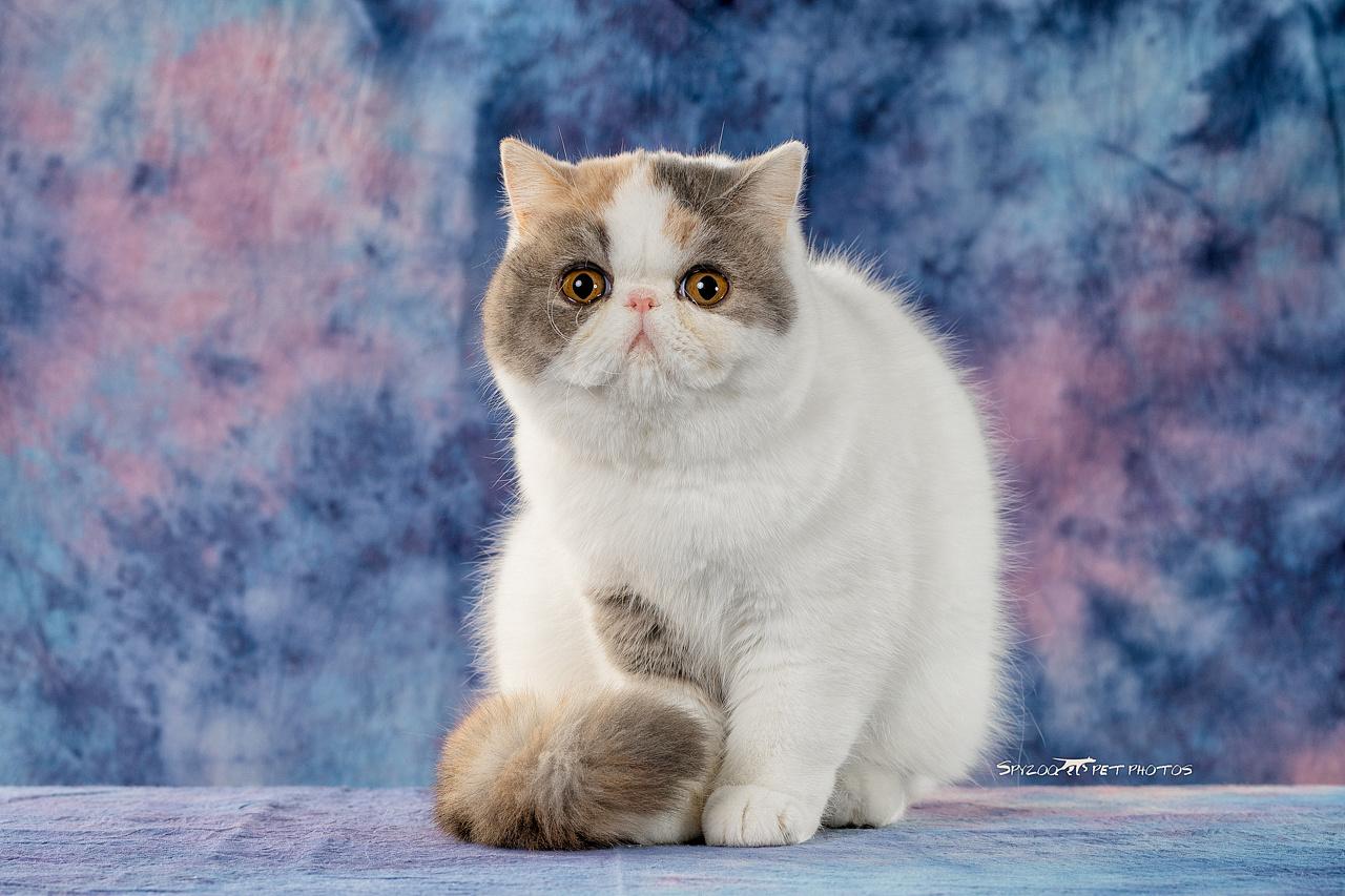 pink cat钢琴简谱