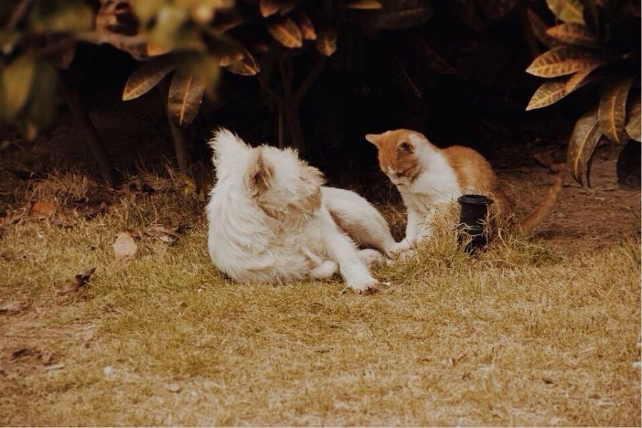 流浪猫与流浪狗|动物|摄影|林仕玲 - 原创设计作品