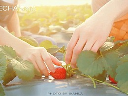 草莓系列第一篇   饮品制作视频   水果茶饮