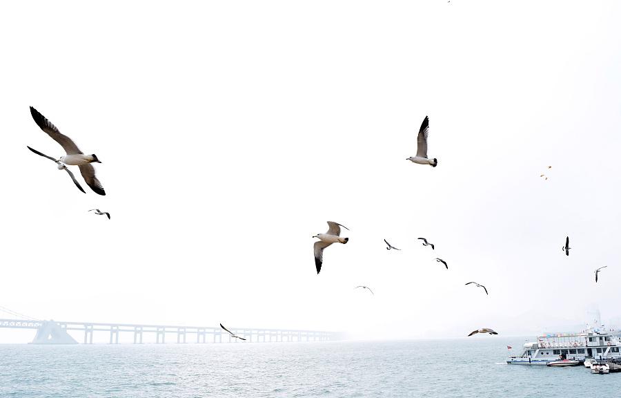 惊起一滩鸥鹭|宠物\/动物|摄影|梅花簪 - 原创设计