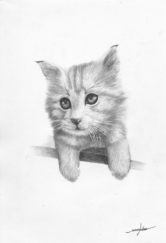 钢笔画~推画法《猫咪》步骤