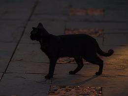 寻猫集38