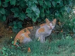 寻猫集48