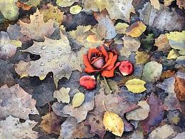 落叶与玫瑰