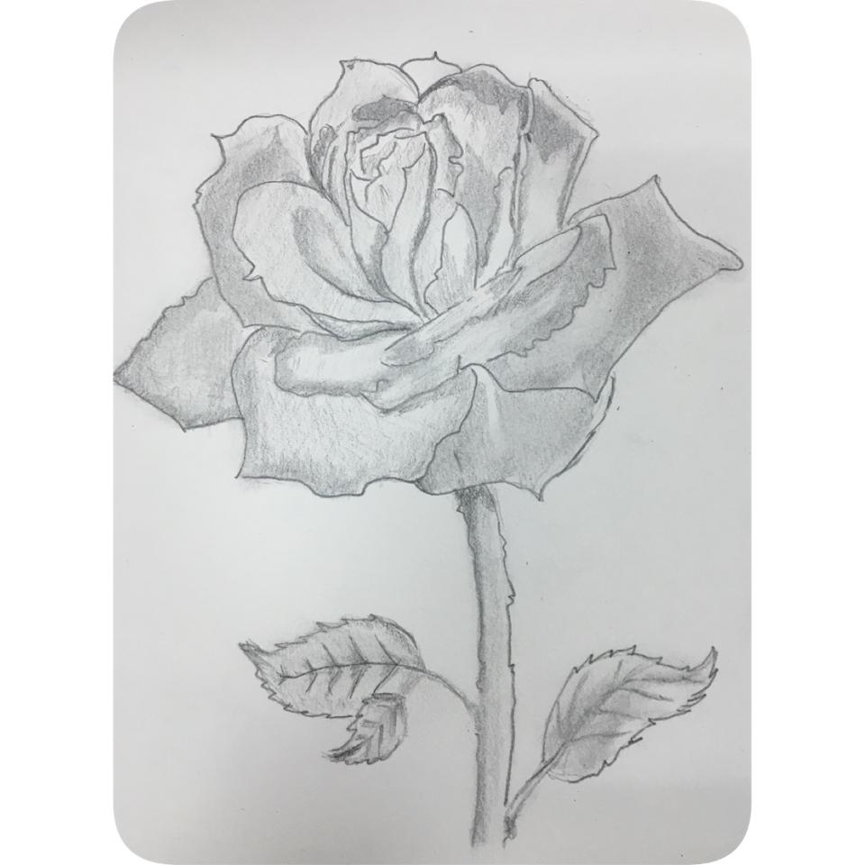 design 简单的素描风景画图片展示_简单的素描风景画相关  素描画花