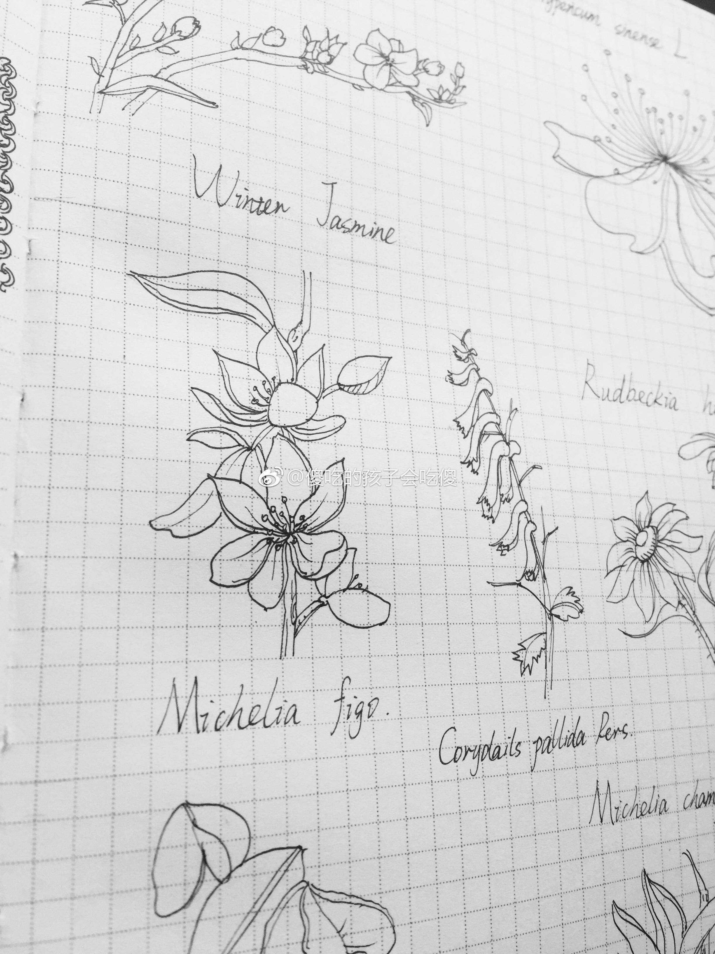 黑白花朵手绘手账