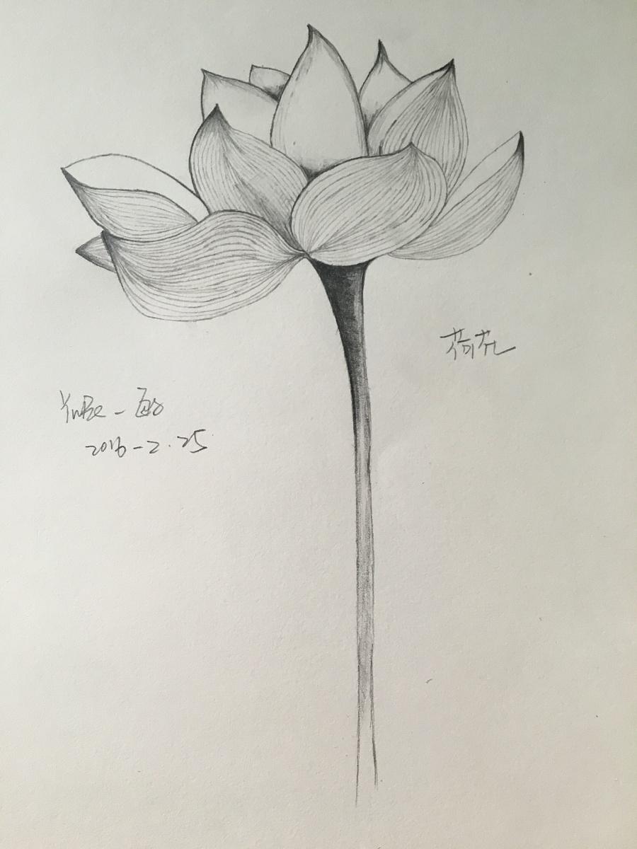 花系列铅笔手绘|绘画习作|插画|长长长长头发