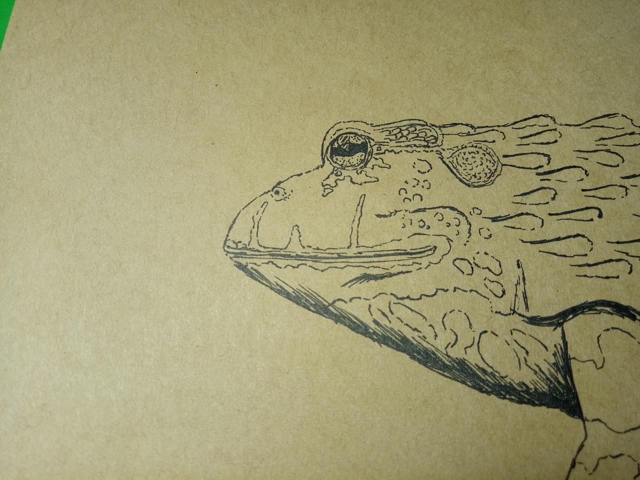 非洲牛蛙手绘