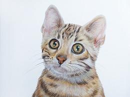 彩铅-豹猫
