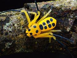 生态微距摄影一组帅气不常见的物种