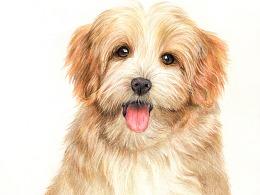 彩铅——小狗