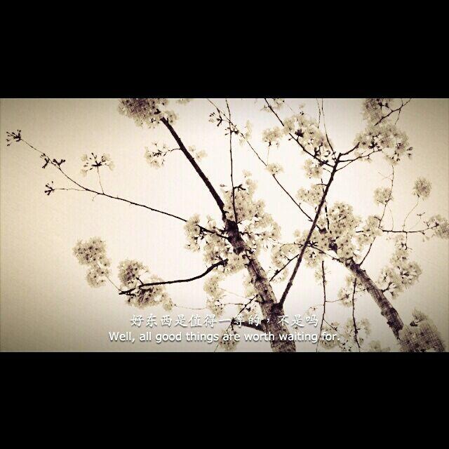 彩铅手绘唯樱花