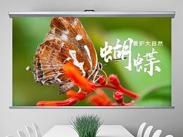 绿色环保春天大自然昆虫动物生物百科ppt模板