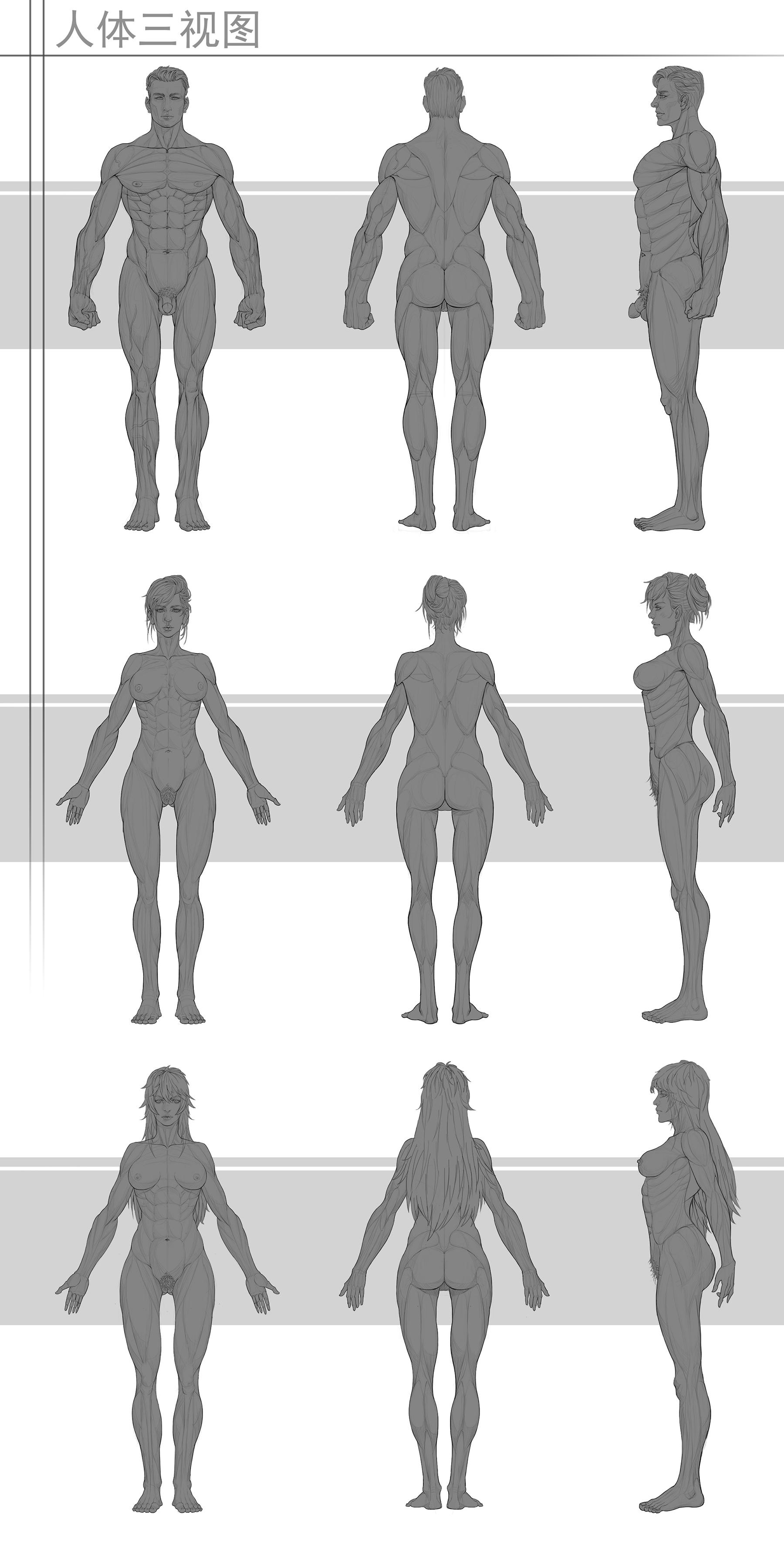 人体_人体三视图