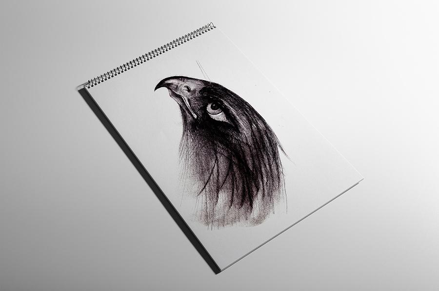 手绘素描(鹰2)